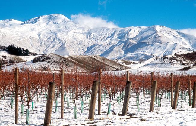 Sam-Neill_snowy - Винодельня Сэма Нила в Новой Зеландии | Блог о вине