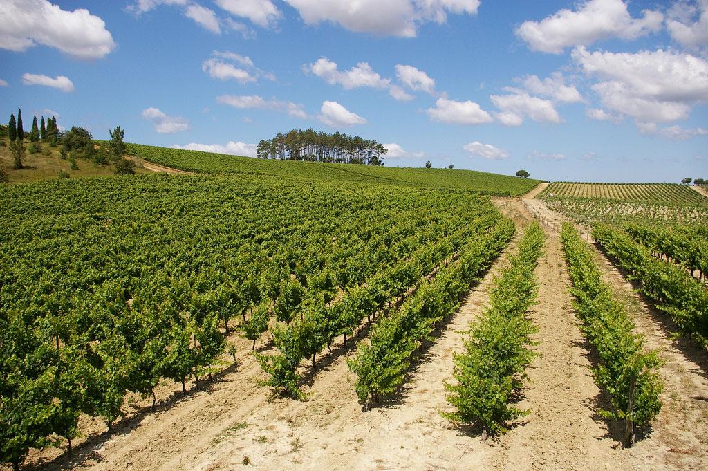 Yamie-Goody_New-Zealand_1 - Виноградники с высоты птичьего полета | Блог о вине