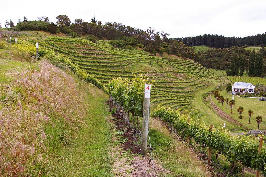 Yamie-Goody_New-Zealand_10