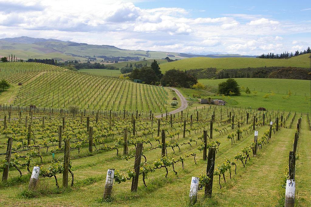 Yamie-Goody_New-Zealand_3 - Фото виноградников с высоты птичьего полета | Блог о вине