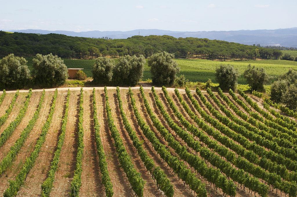 Yamie-Goody_New-Zealand_5 - Пейзаж с виноградниками | Блог о вине