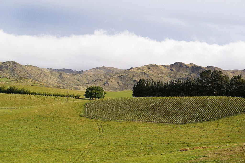 Yamie-Goody_New-Zealand_66 - Фото виноградников|Блог о вине