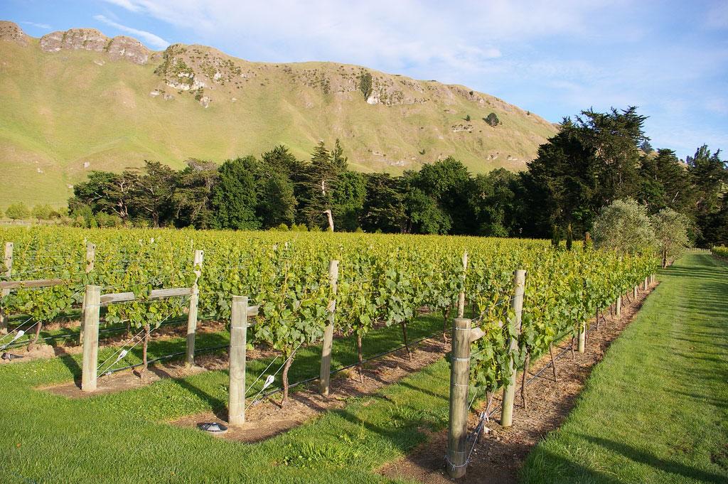 Yamie-Goody_New-Zealand_7 - Фото виноградников с высоты птичьего полета|Блог о вине