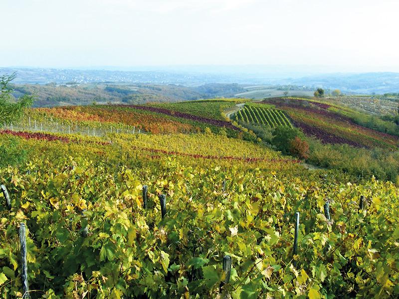 Виноградный и винный край